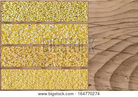 Collage consisting of bulgur millet polenta and couscous grains. Food background. Healthy lifestyle concept. Yellow pattern. Closeup macro shot.