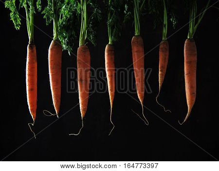 Carrots with leaves hanging in a row against a dark brown background sidelight organic vegetables healthy food