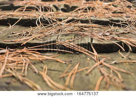 Pine needles on a cabin wooden roof in Kosutnjak forest, Belgrade, Serbia