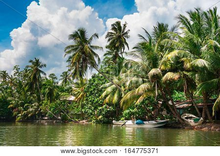 Tropical palm forest on the riverbank. Tropical thickets mangrove forest on the island of Sri Lanka. Village of fishermen .