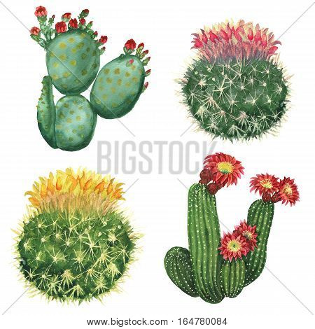 Watercolor cactus set isolated on white background