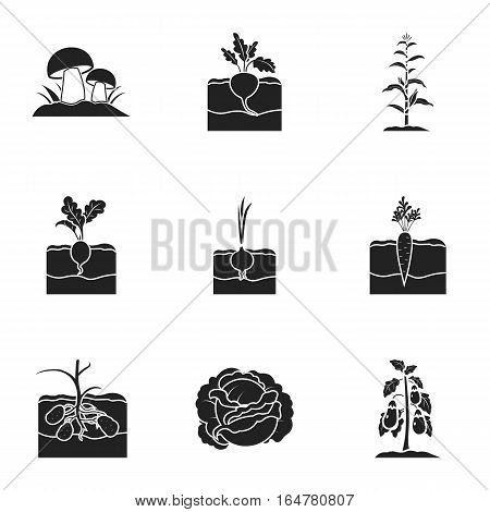 Plant set icons in black style. Big collection of plant vector symbol stock