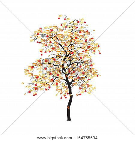 Mountain Ash With Yellow Leaves