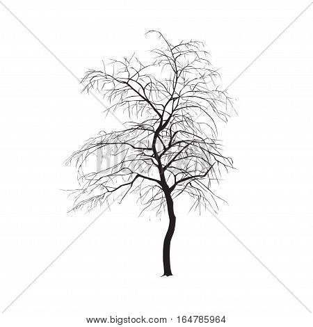 Silhouette: A Tree Without Leaves