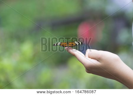 Beautiful Butterfly Sitting On The Hand