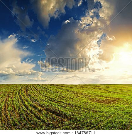 Landscape cloudy sky above the field with unripe wheal