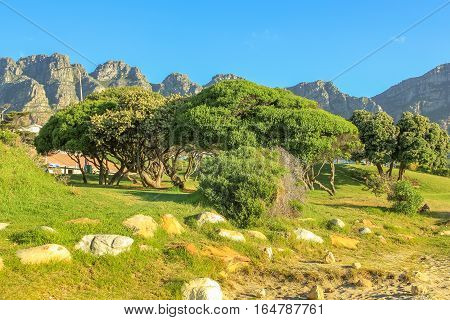 Green landscape of popular Camps Bay with Table Mountain National Park behind him. Camps Bay is one of the most exclusive resort of South Africa in Western Cape.