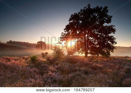 summer sunrise over flowering heather hills Posbank Netherlands