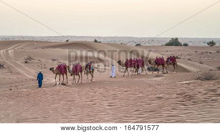 Dubai, UAE - June 1, 2013: Caravan with Camels in the Arabian Desert