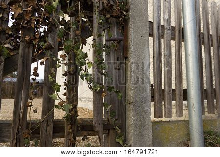 Old wooden gate with lianas, garden, wood.
