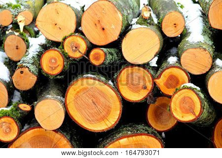 Bunch of felled trees. Orange wooden logs .