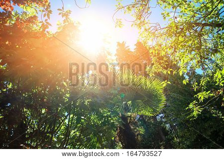 Green plants and sunlight. Foliage on sky background. Breathe in and look up.