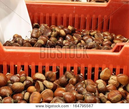 Boxes Full Of Ripe Chestnuts For Sale In The Wholesale Fruit Mar