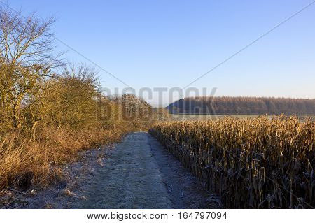 Dry Maize And Woodland