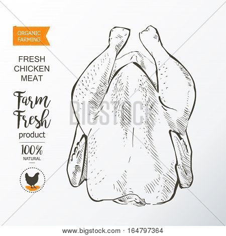 Fresh chicken meat. Top view. Isolated on a white vintage vector isolated sketch hand drown