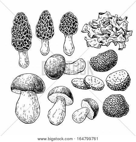 Mushroom hand drawn vector illustration. Sketch food drawing isolated on white background.  Morel, truffle, porcini, wood ear. Organic vegetarian product. Great  for menu, label, product packaging, recipe