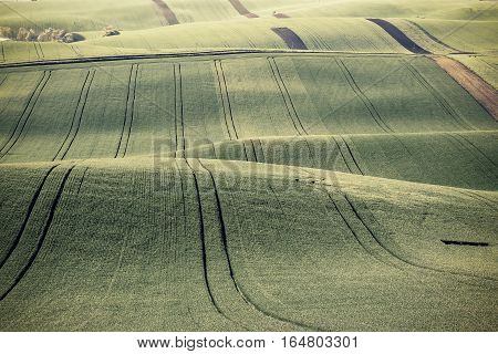 Vintage Emerald Green Agricultural Field