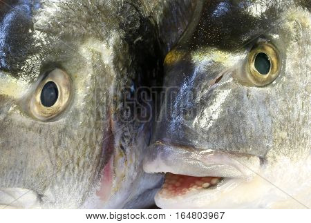 Eyes Of Two Bream Fish Watching