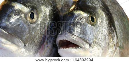 Two Big Bream Freshly Caught Fish