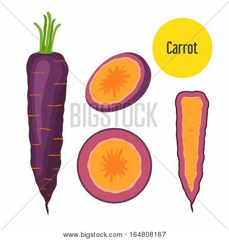 Set of purple carrot. Healthy garden nutrition organic ripe carrot for restaurant market. Flat style.