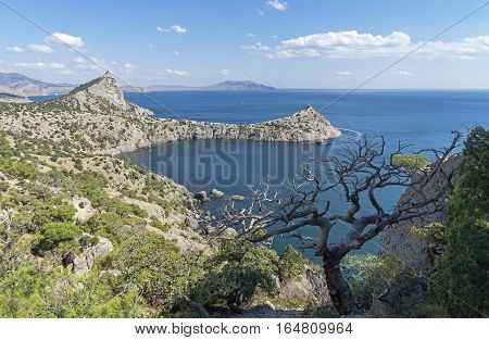 Seascape with a dead relict pine tree. Crimea September.
