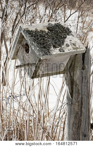 Bird nesting box covered in ice after an ice storm. Background is snow covered and dead winter shrubs and yarrow and wildflowers