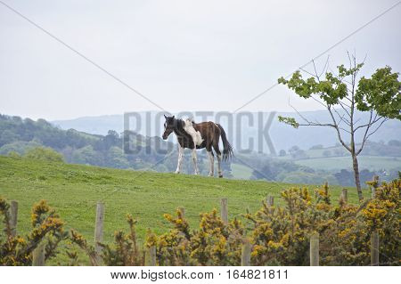 Brown and white horse lone on a hill with mountains in the  background, and tree at the side, green field, Europe