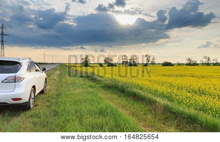 The car stands on the sidelines of blossoming field