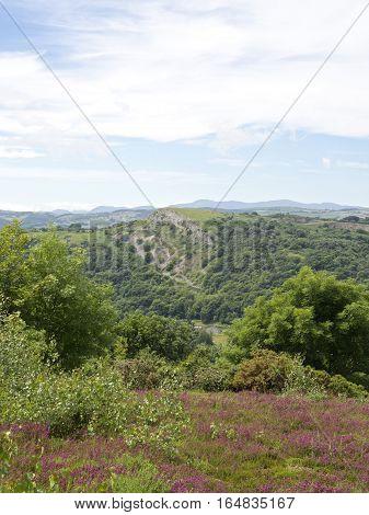 Summer rolling hills portrait, Purple heather in foreground Snowdonia mountains in the background, green fields, bluff Abergele UK Wales