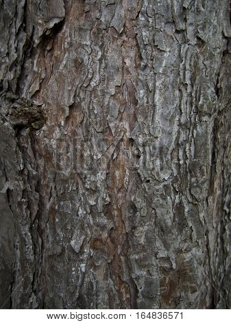 Brown grey tree bark crumbly textured background