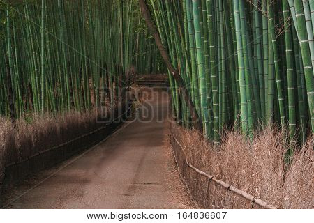 japan bamboo park tourism travel green fence Kyoto