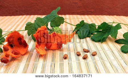 Momordica seeds, fruit and leaves on the table