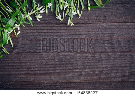 Snowdrops On Wooden Background.