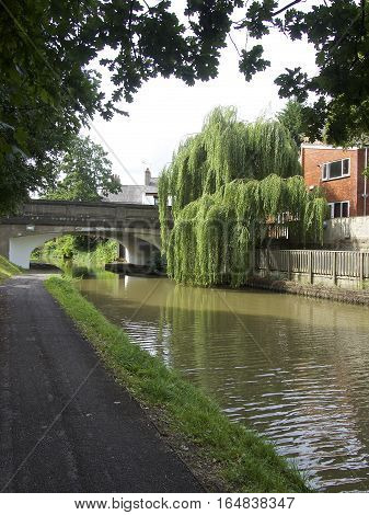 Canal side with bridge and willow tree, wide shot with building, Chester, England UK