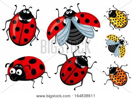 Corel set of several ladybugs. The beetles are drawn in cartoon style. Insects yellow and red fly, crawl, walk. Do ladybugs funny eyes.