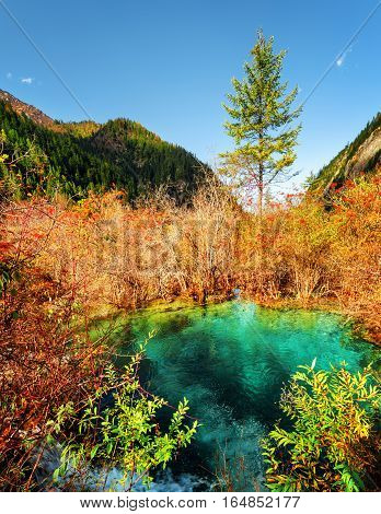 Beautiful Pond With Emerald Water Among Colorful Fall Forest