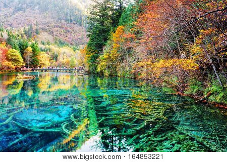 Beautiful Submerged Tree Trunks In Water Of The Five Flower Lake