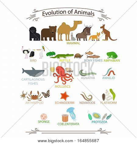 Biological evolution animals. Colorful icons with signs on white background vector illustration
