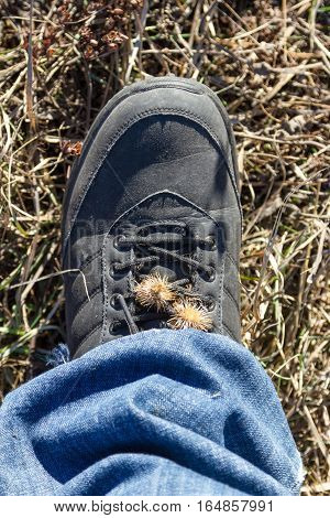 The Seeds Of Thistles On Boot