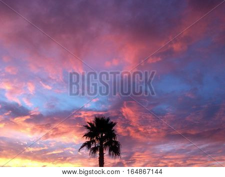 The blackened  silhouette of a palm tree against the backdrop of an  Arizona sky at sunset with pink, yellow, and peach colored clouds