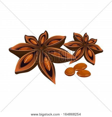 Anise star isolated on white background. Star-shaped fruit of Illicium verum. Realistic vector illustration of chinese star anise seed or badia. Spices and condiments seasoning ingredient