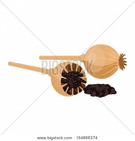 Dried poppy isolated on white background. Seeds are oilseed obtained from opium poppy. Vector botanical illustration of aromatic herb seasoning condiment with narcotic effect. Used in medicine