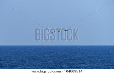 Seagull on Rocky reef near beach on a sunny day