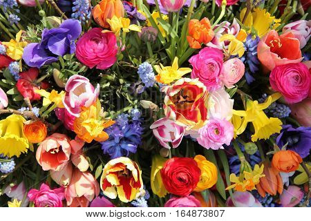 Spring Flowers in a multicolored mixed bouquet