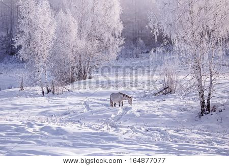 lonely horse stay on snowy forest in the woods in winter