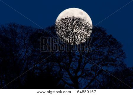 Full moon behind silhouetted trees. Large winter moon shining through defoliated branches of deciduous trees in British countryside
