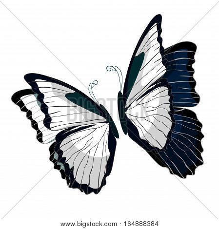 Morpho Butterfliese Butterfly Monarch Black And White.  Vector Illustration