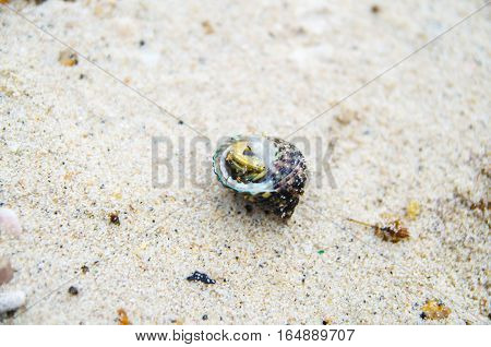 hermit crab on sand beach nature background