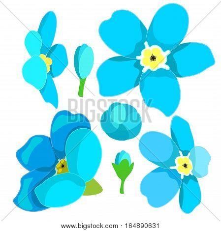 set of forget-me-alpine a wild flower vector illustration