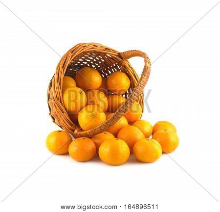 Strewed tangerines and inverted wicker basket isolated on white background close up